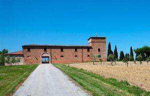 Spalletti's vineyard